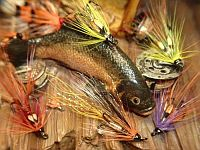 Picture of irish_fly_craft_shrimp_pattern.jpg